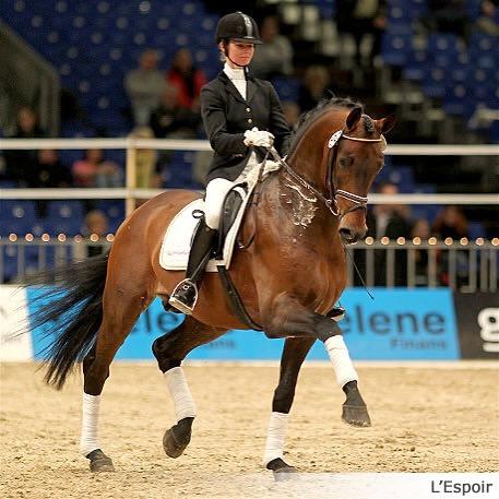 L'Espoir - Performance Stallion Romanno Stud