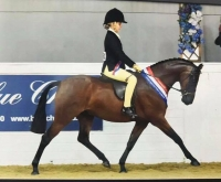 Stanley Grange Regal Heights Offspring - Romanno Highland Fling