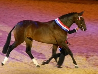 Bedriska - Cuddy 2012 - Offspring of De La Rosa (Belvedere)