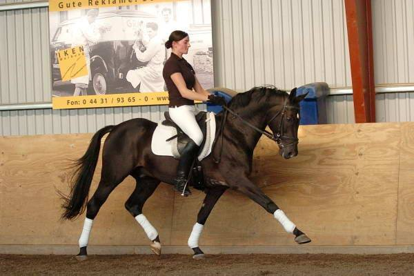 Boss Junior - Pony Stallion 4