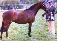 Broadgrove Cantata - Pony Mare Romanno Stud