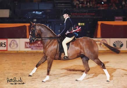 Chiddock Spot On - Pony Mare, Romanno Stud