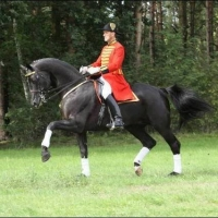 Romanno Stud Stallion - Hochadel