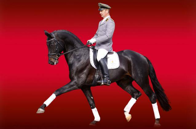 Performance Stallion Hochadel Offspring