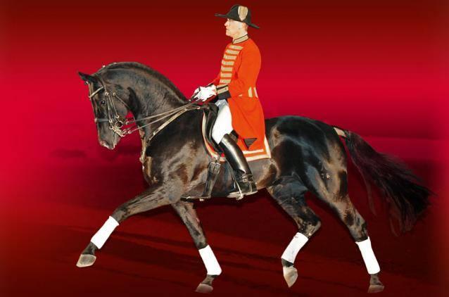 Romanno Stud Stallion - Hochadel 3
