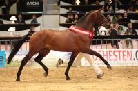 L'Espoir - 2009 Performance Stallion Romanno Stud