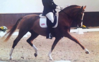 Pretty Woman III - Pony Mare Romanno Stud img 2