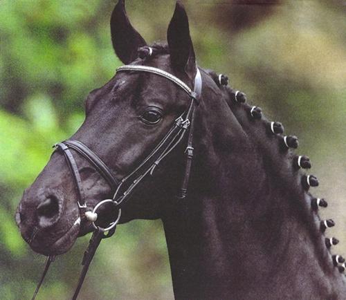 Rubin Star N - Stallion