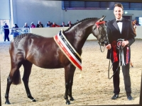 Rotherwood Flamenco Offspring - Whinnie 2017 Equifest